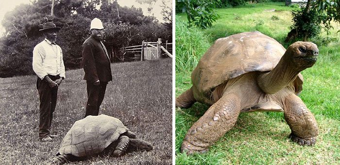 182-year-old-tortoise-jonathan-15