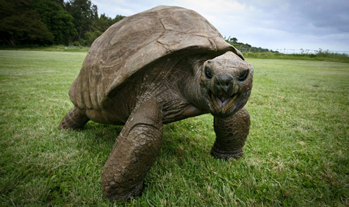 182-year-old-tortoise-jonathan-4