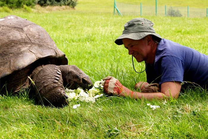 182-year-old-tortoise-jonathan-6