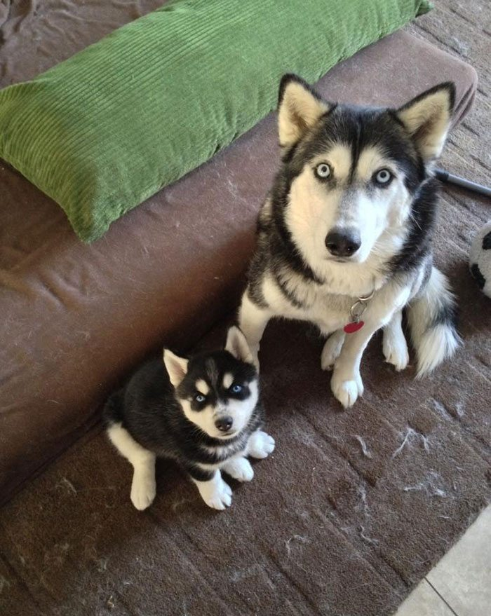 dogs-and-puppies-13__700