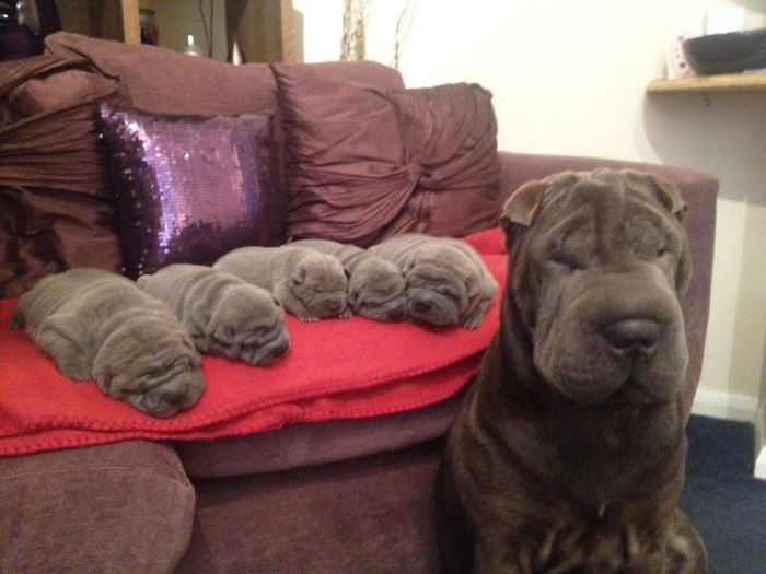 dogs-and-puppies-14__700