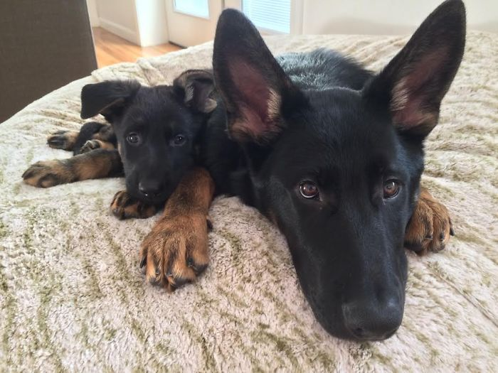 dogs-and-puppies-15__700
