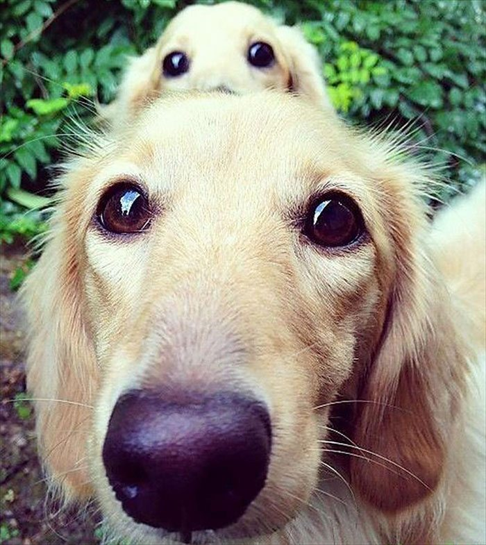 dogs-and-puppies-16__700