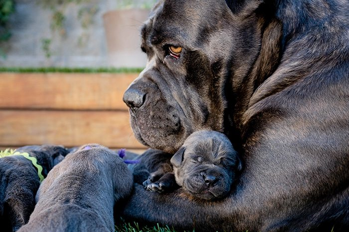 dogs-and-puppies-23__700