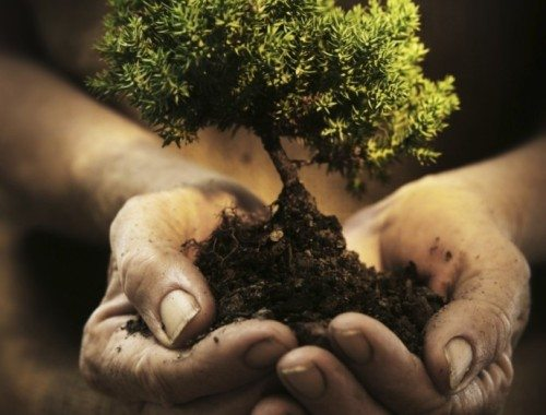 hands-holding-a-small-tree
