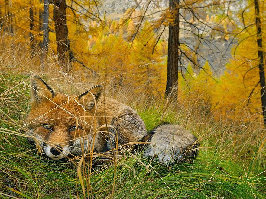 national-geographic-photo-of-the-day-internet-favorites-2015-34__880