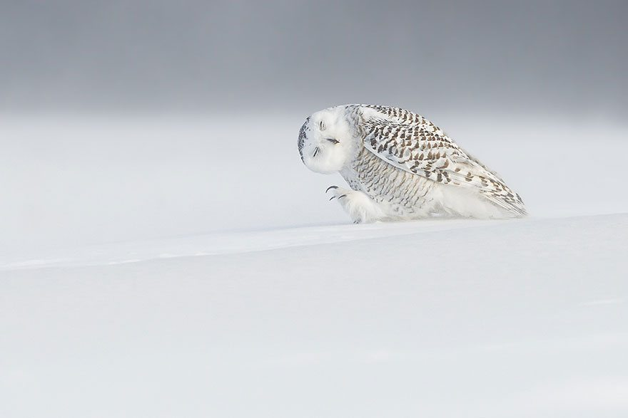 national-geographic-photo-of-the-day-internet-favorites-2015-43__880