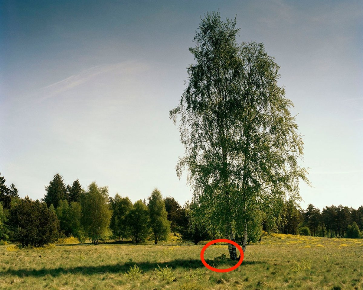 the-sniper-is-under-the-left-side-of-the-birch-tree