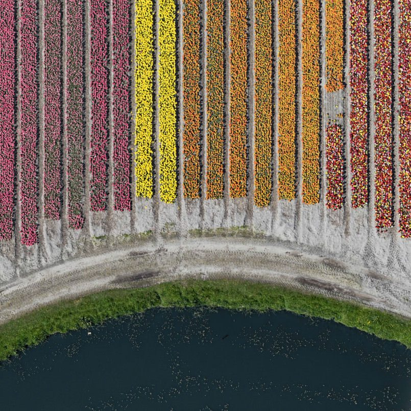 aerial-photos-show-just-how-beautiful-netherlands-tulip-fields-are4-805x805