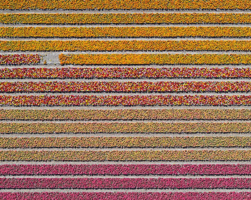 aerial-photos-show-just-how-beautiful-netherlands-tulip-fields-are8-805x644