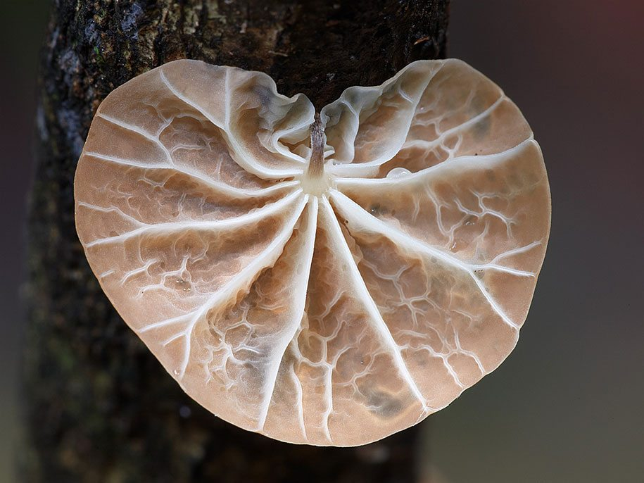 fungi-mushrooms-photography-steve-axford-10