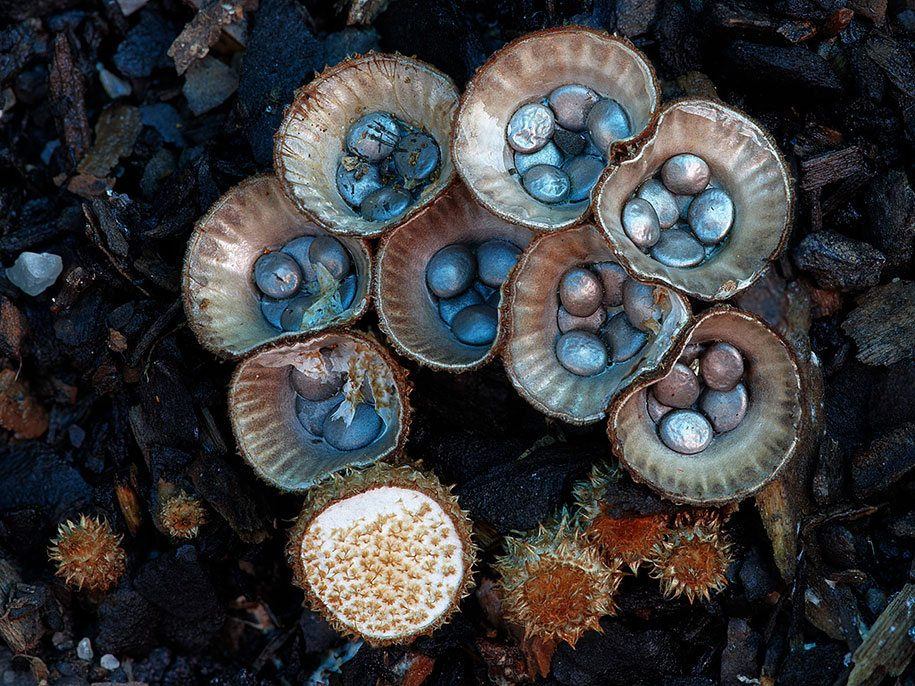fungi-mushrooms-photography-steve-axford-14