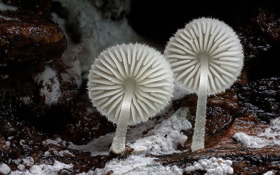 fungi-mushrooms-photography-steve-axford-21