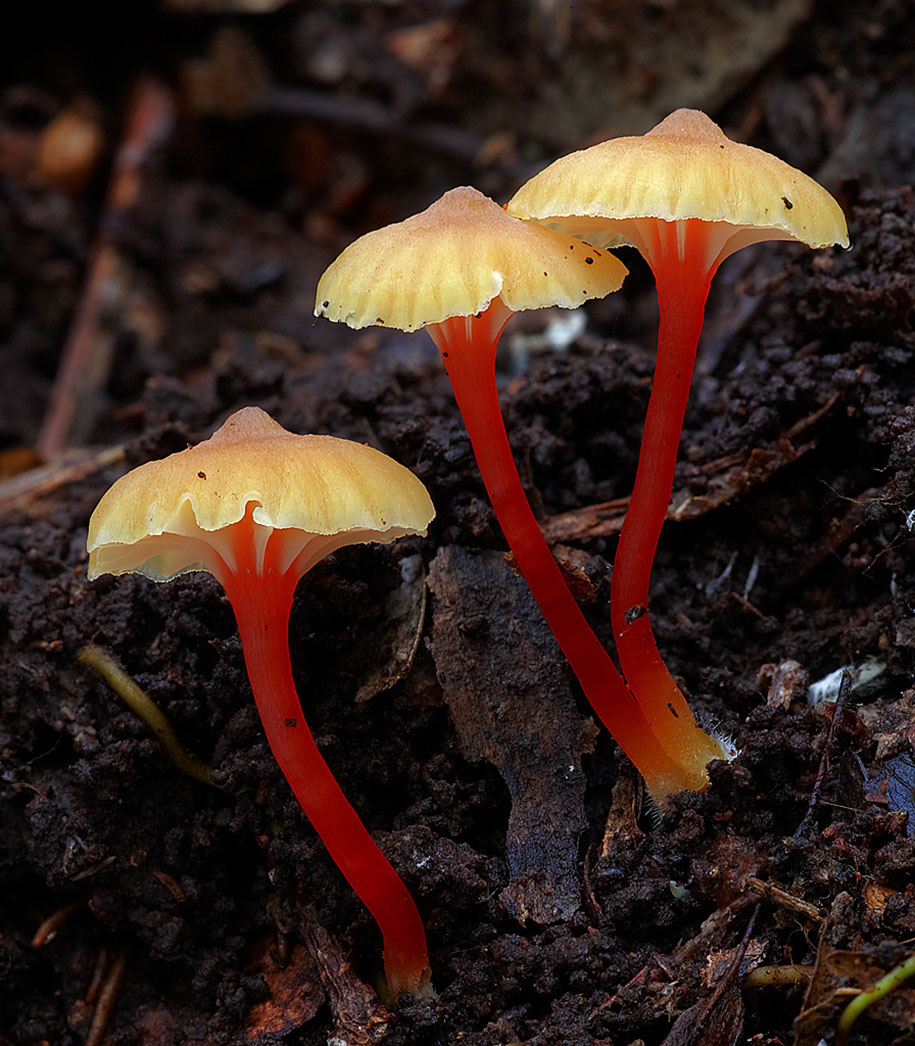 fungi-mushrooms-photography-steve-axford-26