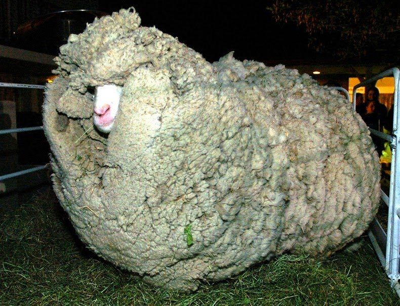 shrek-the-sheep-3[6]